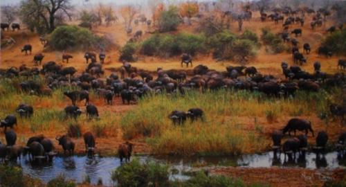 Bisontes (o búfalos) migrando