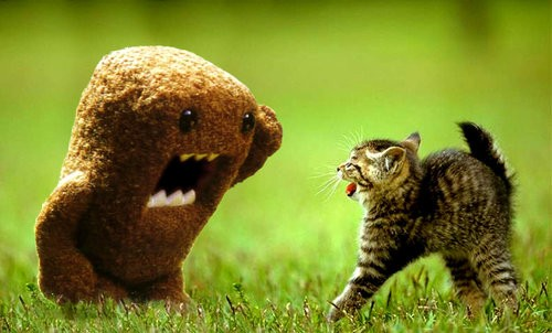 Domo-kun y gatito