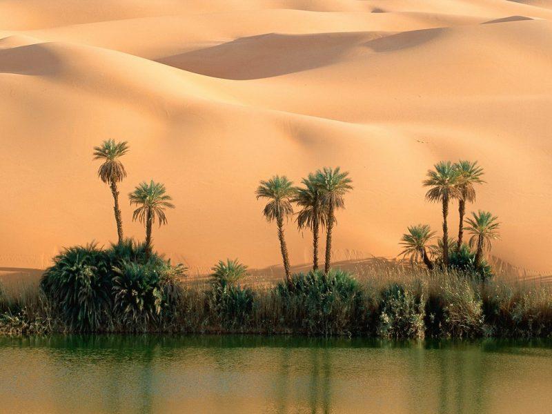 La vida en un desierto sin RSS